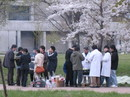 Joint cherry-blossom viewing of the Laboratory of Wildlife Biology and the Laboratory of Theriogenology